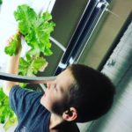 Sustainable Business: Vertical Gardens in Schools
