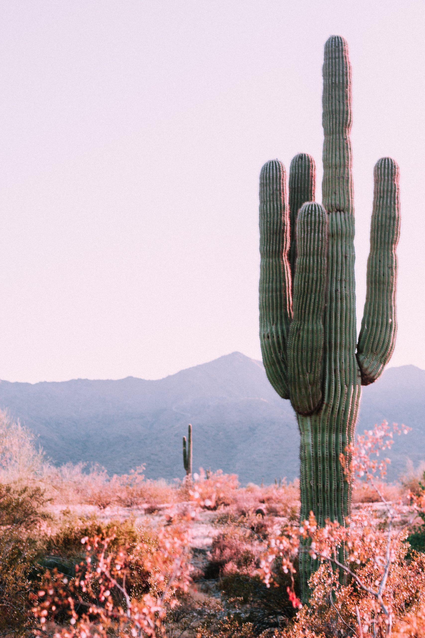 spring cactus in arizona